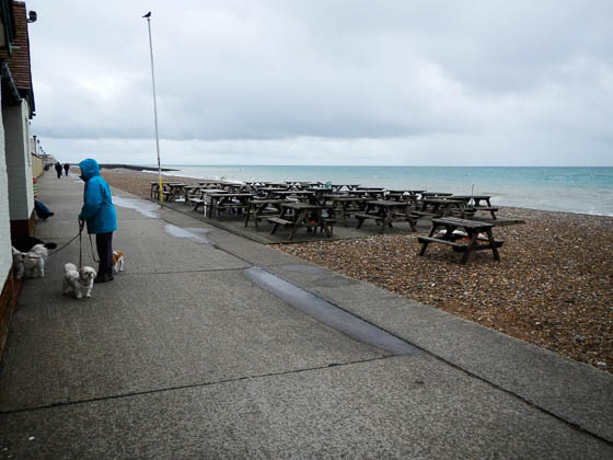 The almost deserted beach at Seaford